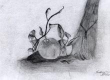 Warsztaty artystyczne: KATARZYNA SIĘBOR Martwa natura z jabłkiem, ołówek