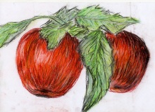 Warsztaty artystyczne: KATARZYNA RACZYŃSKA Jabłka, pastel