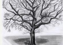 Warsztaty artystyczne: KATARZYNA LELIGDOWICZ Studium drzewa, ołówek