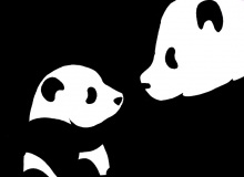 Pandy, plakatówka, papier